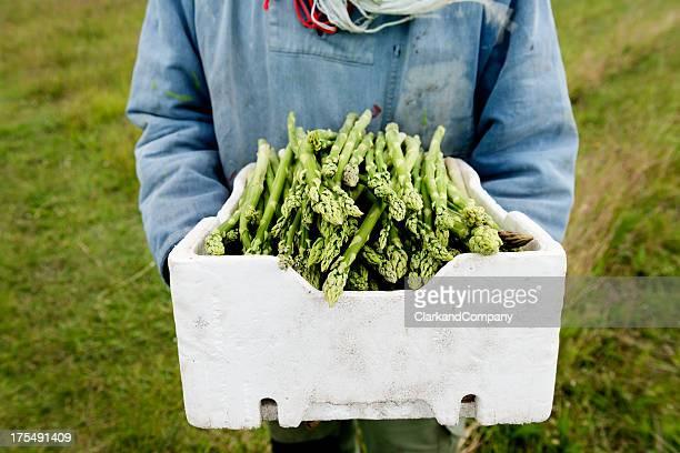 Farmer hält eine box aus biologisch angebauter Spargel