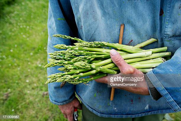 Farmer hält einen Haufen frisch geerntete Produkte aus Spargel