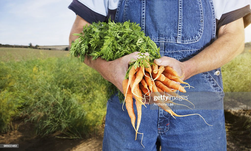 Farmer holding carrots : Stock Photo
