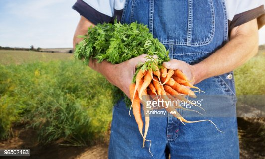 Farmer holding carrots : Stock Photo