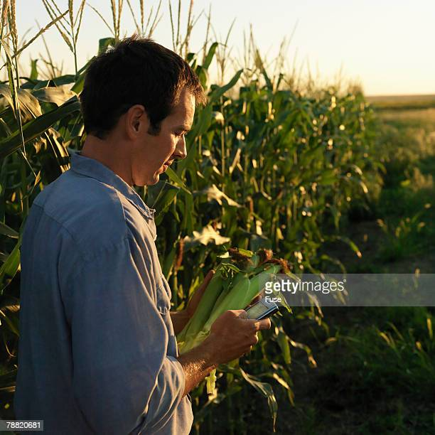 Farmer Holding Cobs of Corn and a PDA