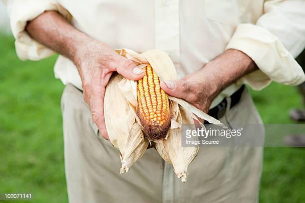 Farmer holding corn cob
