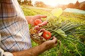 Farmer holding fresh picked vegetables, flare of the morning sun