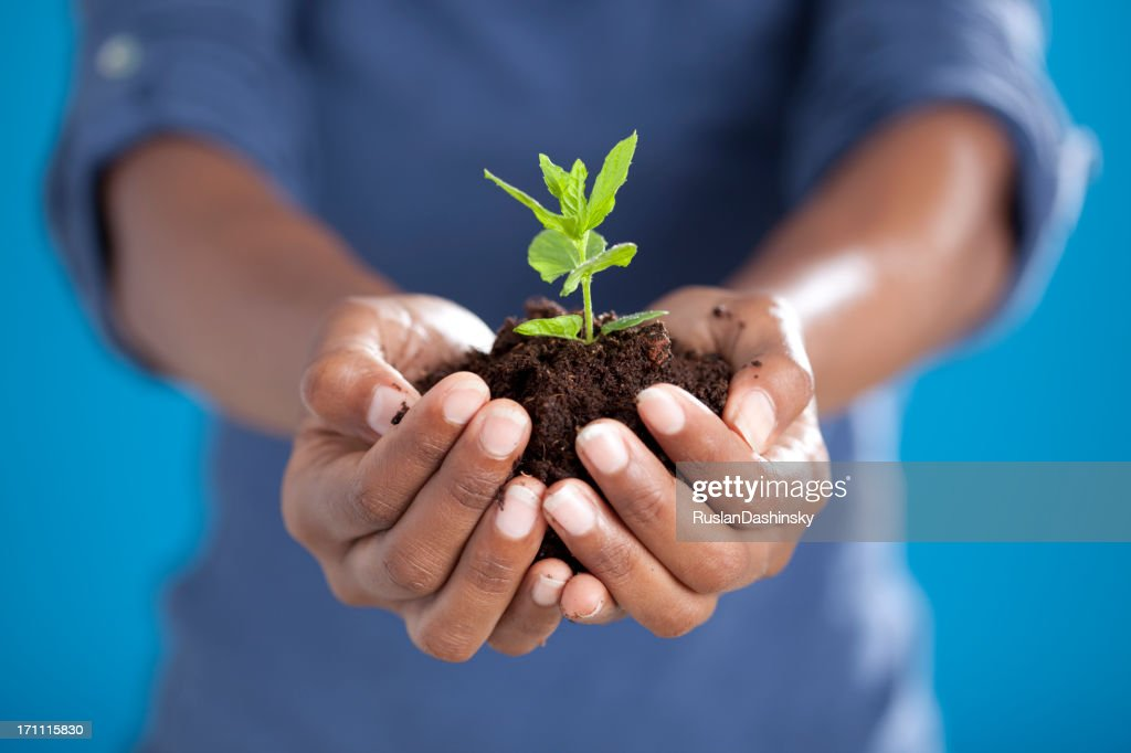 Farmer holding new plant in hands