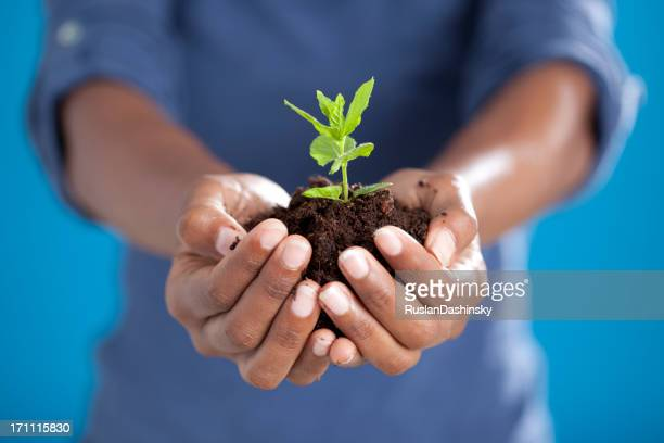 Agriculteur tenant la nouvelle usine dans les mains