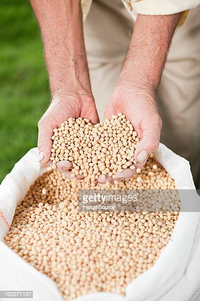 Agriculteur tenant soybeans