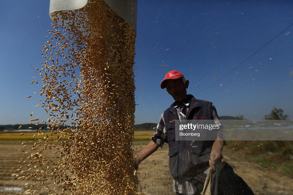A farmer holds a sack of rice as a combine harvester pours rice into it during harvest at in a paddy field in Yeoju, South Korea, on Thursday, Oct. 11, 2012. South Korea will boost production of rough rice to 5.801 million metric tons in the year that starts Nov. 1, compared with an estimated 5.616 million a year earlier, the U.S. Department of Agriculture's Foreign Agricultural Service said on Aug. 2 in a report posted on its website. Photographer: SeongJoon Cho/Bloomberg via Getty Images