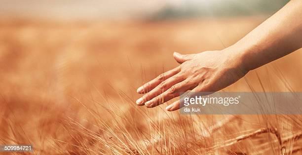 Agricoltore nel campo
