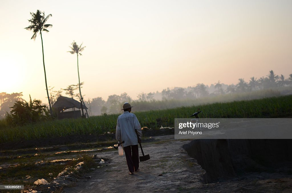 A farmer in a former sugarcane field in Silir village that has been converted into a brick factory. Many farmers in Indonesia have had to convert agricultural land because it is no longer profitable. Consequently Indonesian agricultural production has declined. Although Indonesia is an agricultural country, it still has to rely heavily on imported food staples such as rice, sugar, soybeans and corn. The Central Statistics Agency (BPS) announced that the number of farming households in Indonesia has decreased by 5.04 million families in the past 10 years. The 2003 Census of Agriculture claimed 31.17 million farm households. But in 2013 the number had fallen to 26.13 million. Indonesia has been listed as the world's largest sugar exporter. In 1930, when Indonesia was still called the Dutch East Indies, some 179 sugar factories produced over 3 million tons of sugar each year. Currently there are only 62 sugar factory in Indonesia..