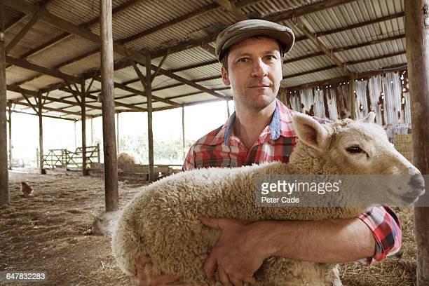 Farmer in barn holding sheep