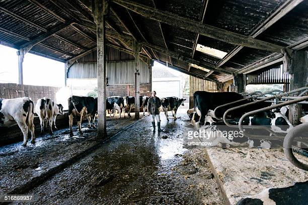 Farmer in cattle shed