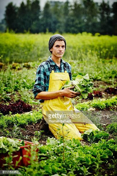 Farmer in field harvesting organic lettuce