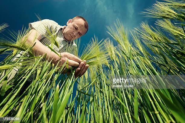 Agriculteur dans le champ