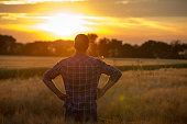 Young handsome farmer standing in wheat field with hands on hips and looking forward at sunset