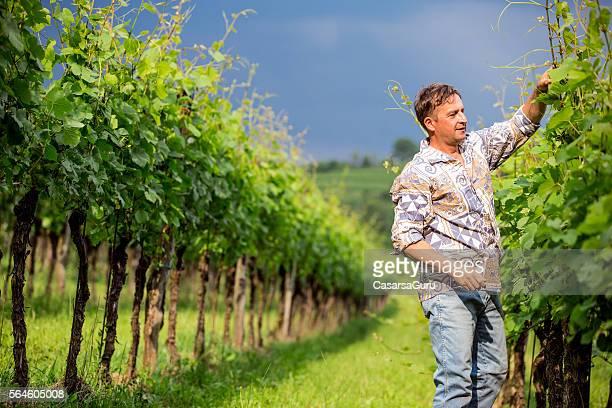 Farmer in his Vineyards