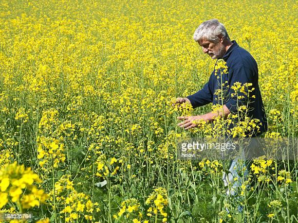 Agricultor de colza canola