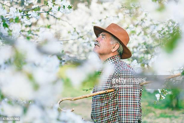 Farmer inspecting cherry blossom