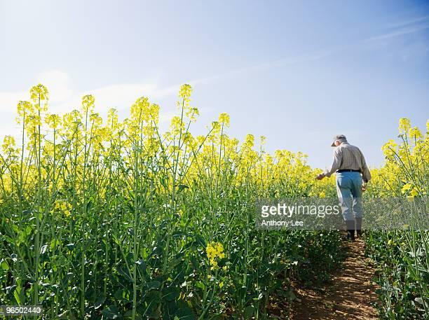 Farmer inspecting crop