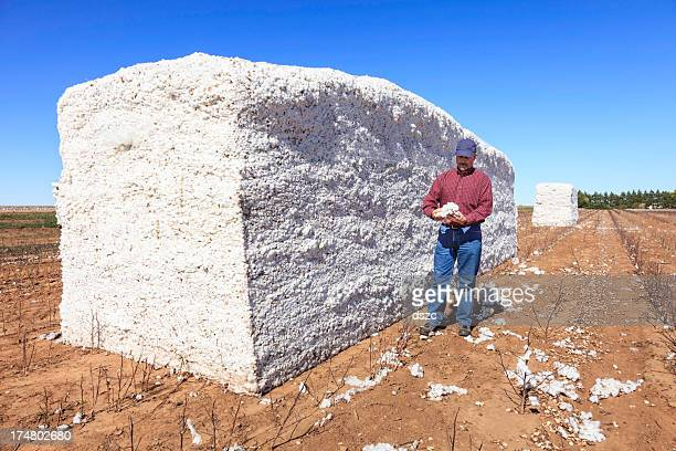 farmer inspects cotton in harvested module