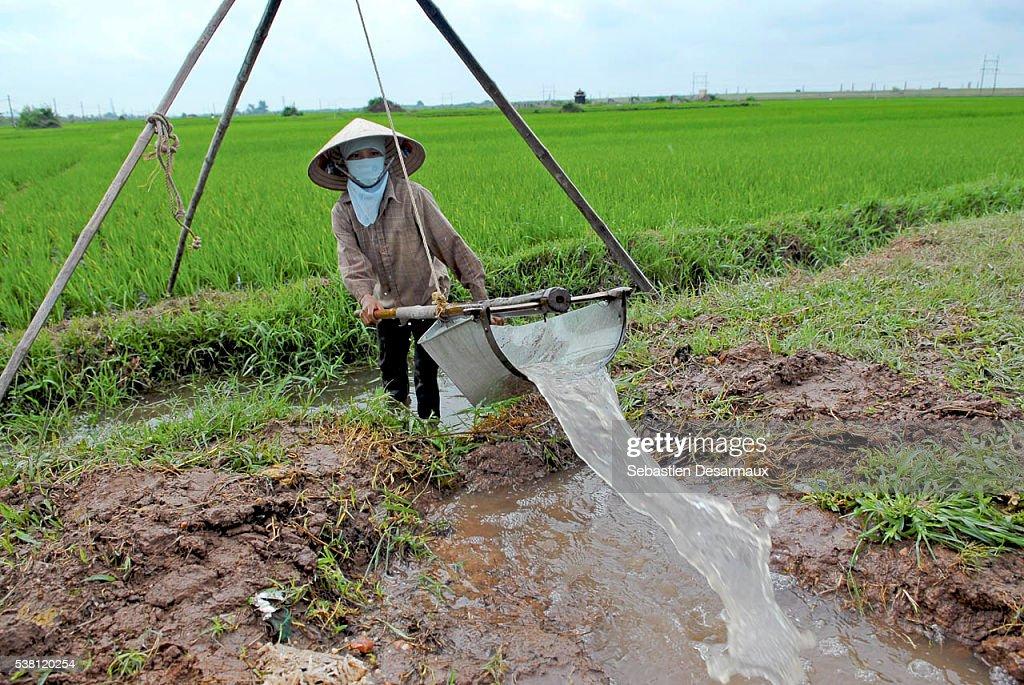 Farmer Irrigating Field in Vietnam