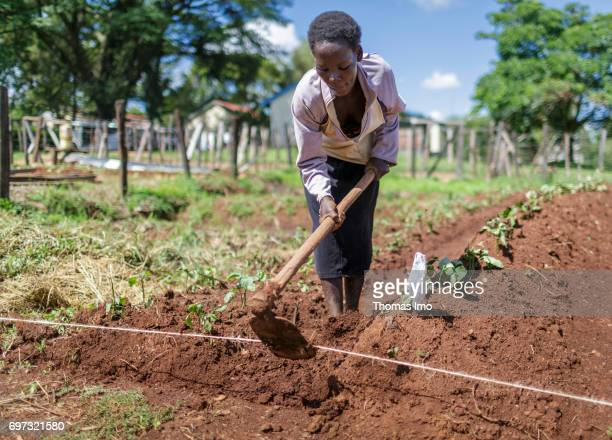 A farmer is hacking a field at the Bukura Agricultural Training Center in Kakamega County on May 16 2017 in Kakamega County Kenya