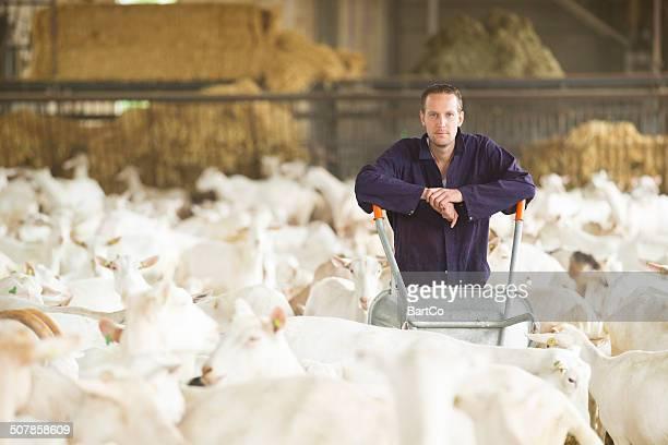 Agriculteur travaille avec les chèvres