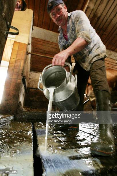 Farmer Jakob Moesl empties a can of milk he had just milked from one his cows into a gutter in his barn on May 28 2008 in Hofstetten near Landsberg...