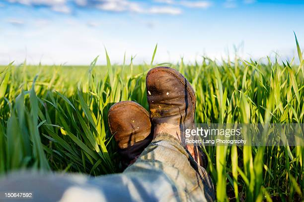 Farmer laying down in a wheat crop