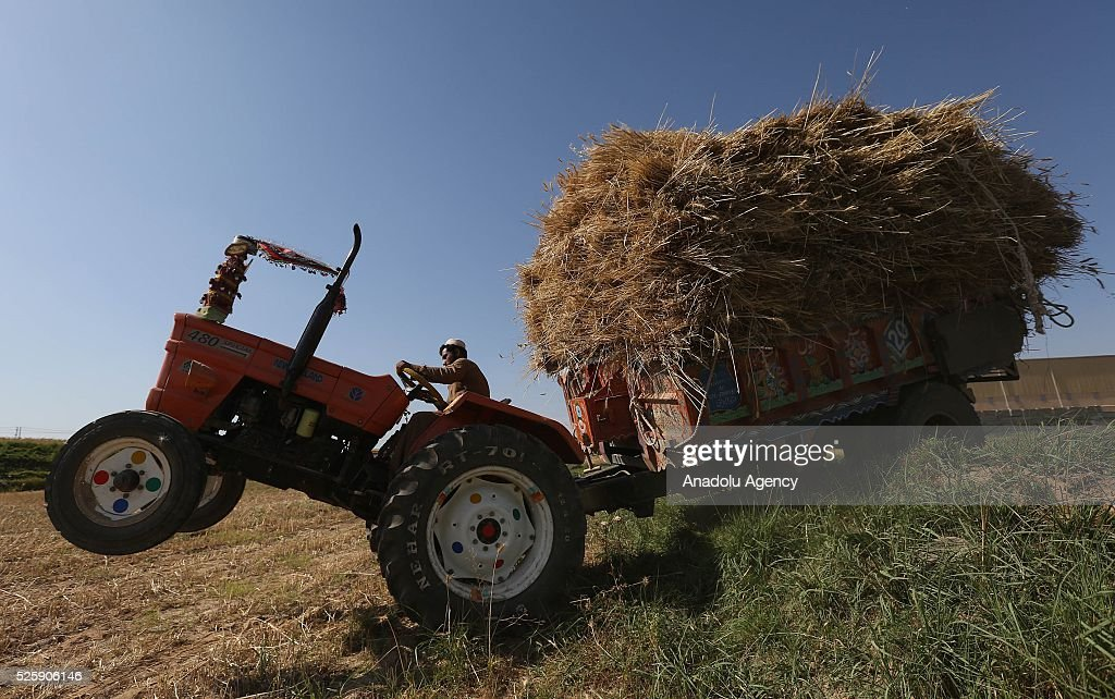 A farmer loads wheat crops onto a tractor trailer during wheat harvest in a village outside of Islamabad, Pakistan on April 28, 2016.
