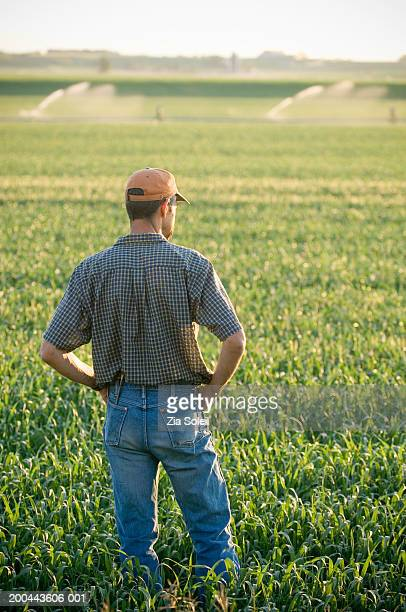 Farmer looking over wheatfield, rear view, summer