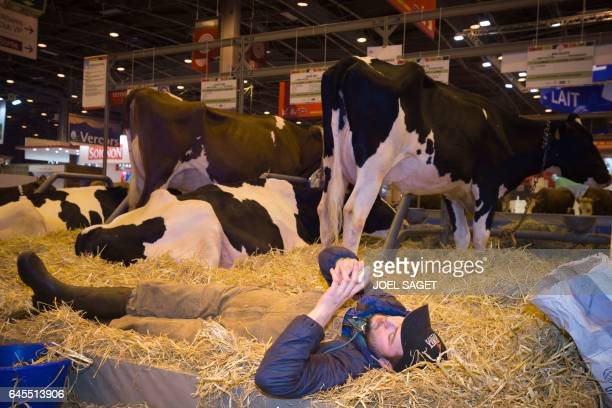 A farmer looks at his phone as he lies next to his cattle at the Agriculture Fair in Paris on February 26 2017 / AFP / JOEL SAGET