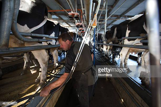 A farmer monitors operations as dairy cows are milked in a milking parlor at a farm that supplies to Fonterra Cooperative Group Ltd in Hamilton New...