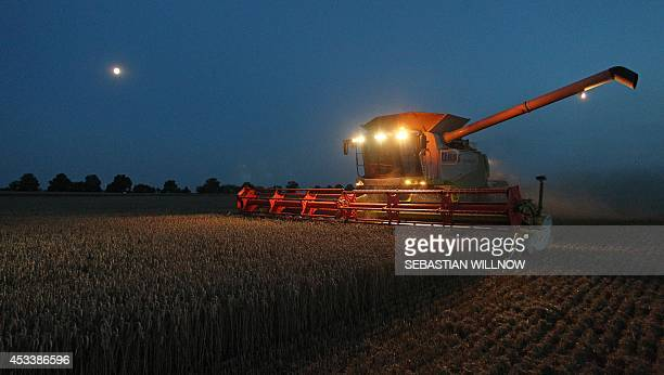 A farmer on a combine harvester crops wheat on a field in Hohenossig near Leipzig eastern Germany on August 8 2014 As meteorologists forecast...