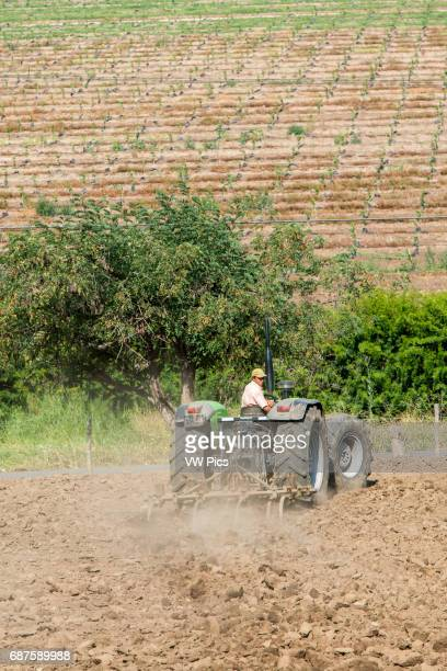 Farmer on a tractor working land on a produce farm Curacavi Valley in Chile