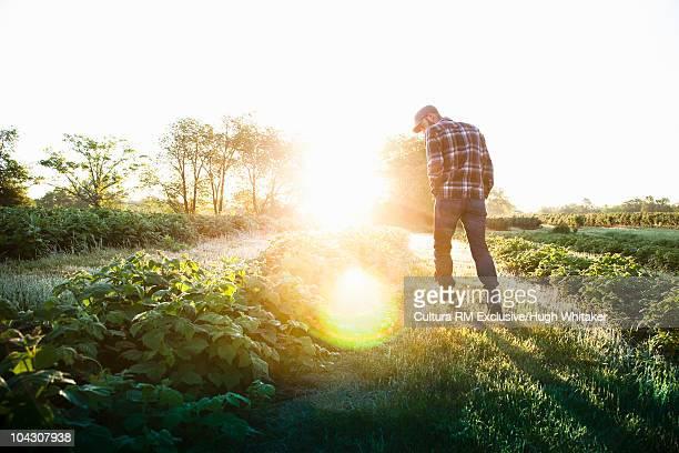 Farmer on berry farm