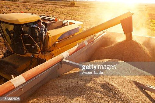 Farmer on combine harvester pours grain into a trailer.