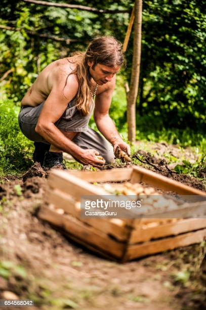 Farmer On Organic Farm Harvesting Potatoes