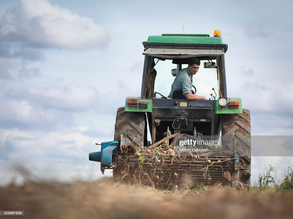 Farmer on tractor harvesting organic potatoes
