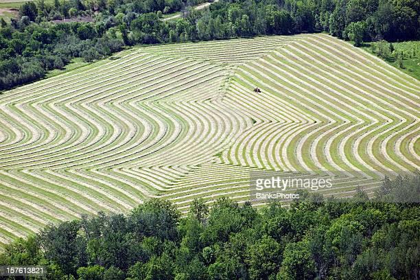 Farmer on Tractor Raking Hay into Unique Pattern