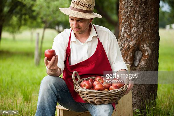 farmer picking apples in his orchard