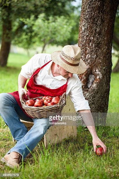 farmer retiro manzanas en su huerta