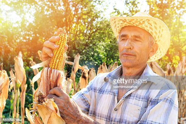 Agriculteurs cueillette de maïs