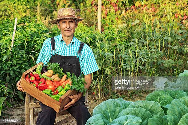Agriculteur cueillir des légumes