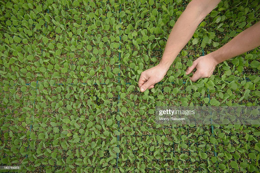 Farmer planting seedlings on organic farm, close up