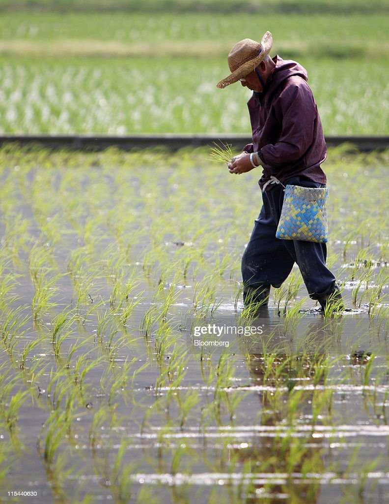 A farmer plants rice in Obama town Fukui prefecture Japan on Friday June 2011 Rice futures for July delivery rose as much as 22 percent to $14795 per...