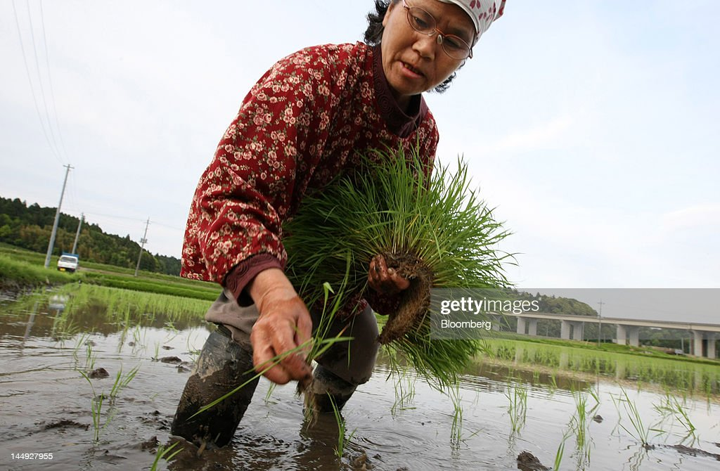 A farmer plants rice seedlings in a paddy field in Katori City, Chiba Prefecture, Japan, on Sunday, May 13, 2012. Japan produced 7.7 million tons of rice in the 2010-2011 marketing year, becoming the world's 10th-biggest grower, according to U.S. Department of Agriculture's website. Photographer: Tomohiro Ohsumi/Bloomberg via Getty Images