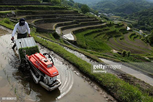 A farmer plants rice seedlings using a rice transplanter in terraced paddy fields in the Nakayama District of Shodo Island Kagawa Prefecture Japan on...