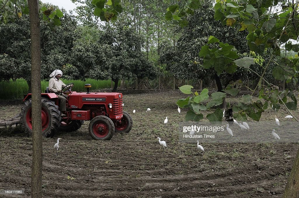 A farmer ploughing his fields on tractor as people go on with their daily routine amidst security in Kawal village from where the communal violence started on September 11, 2013 in Muzaffarnagar, India. A tense Muzaffarnagar was largely calm today even as the death toll in one of the worst communal outbreaks in Uttar Pradesh officially stood at 37.