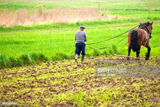 Farmer Plowing With Horse On Agricultural Field