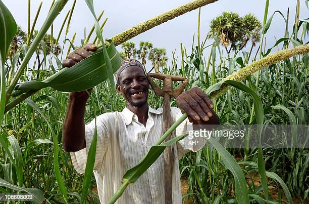 HAMAA farmer poses in his millet field on January 27 2011 near the village of Simiri Niger where the 2009 food crisis was controlled thanks to good...